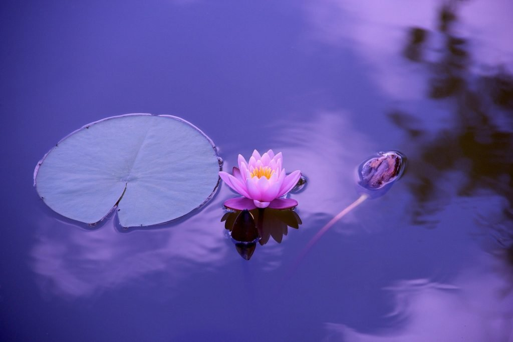 Lotus-spiritual-transformation